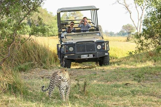 Botswana Nature Park Tourist in Car
